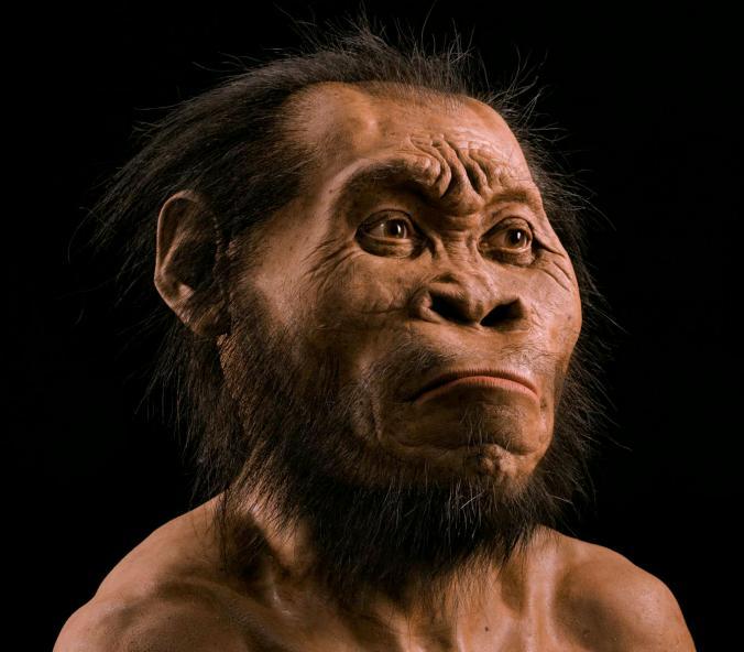 Homo Naledis